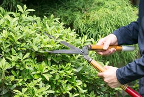 植木の手入れ・剪定イメージ