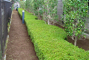 植栽・造園イメージ